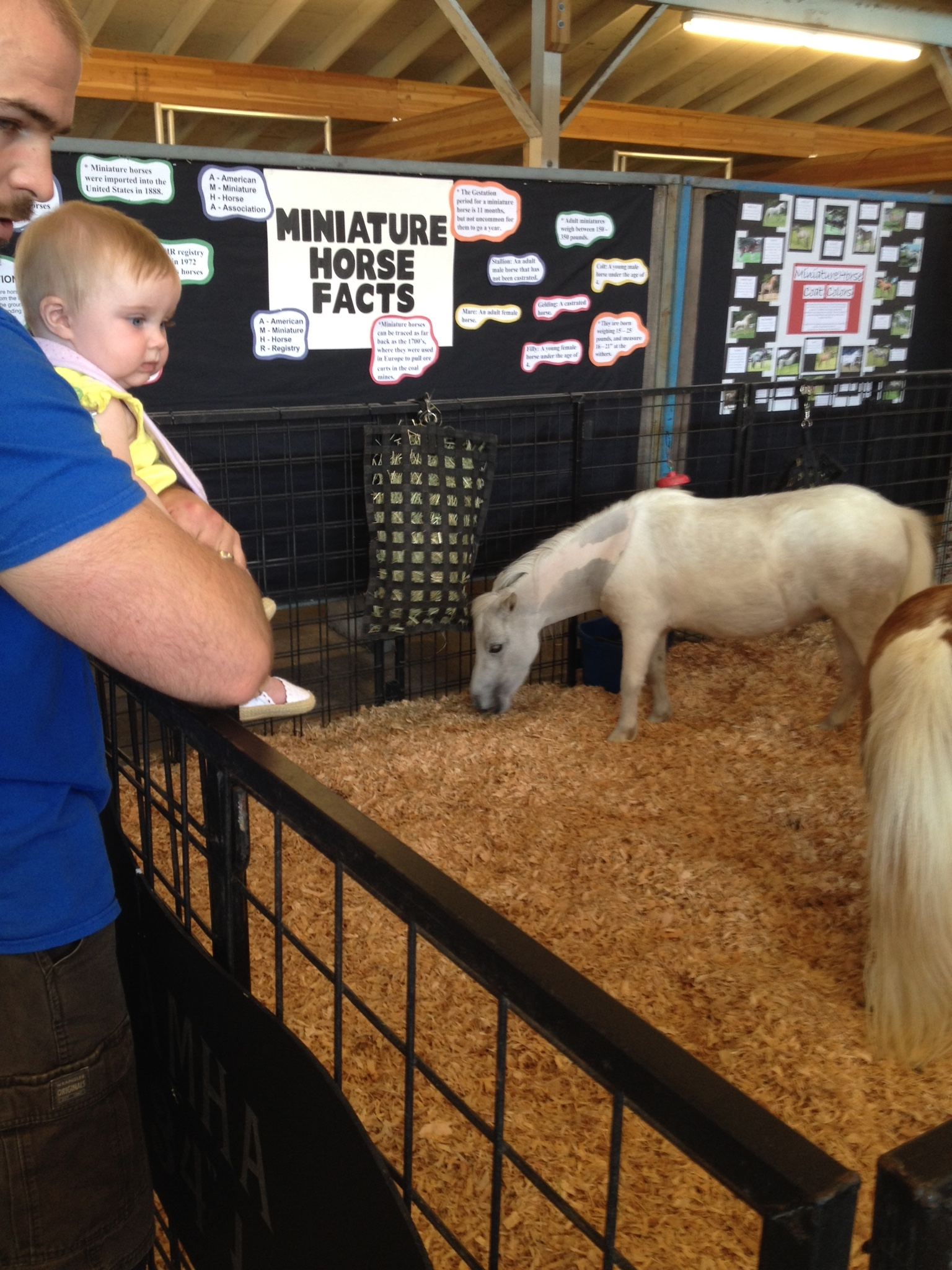 Wow, those little horses are almost Evie sized!