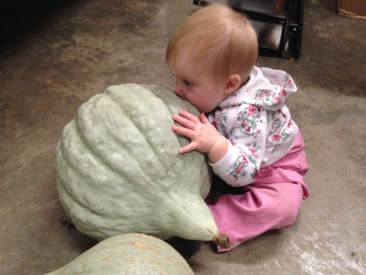 Evie will eat the mother hubbard squash. It is her destiny.