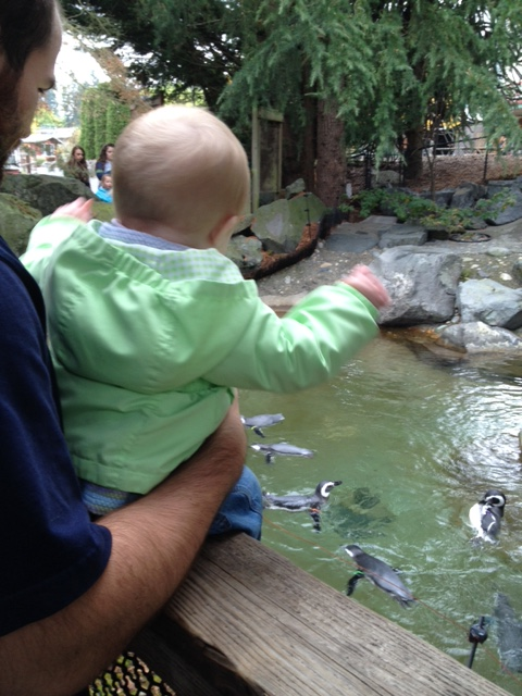 Daddy, can we get a penguin for the bathtub at home?
