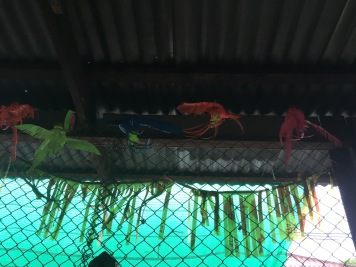 Lopburi Sight Seeing51
