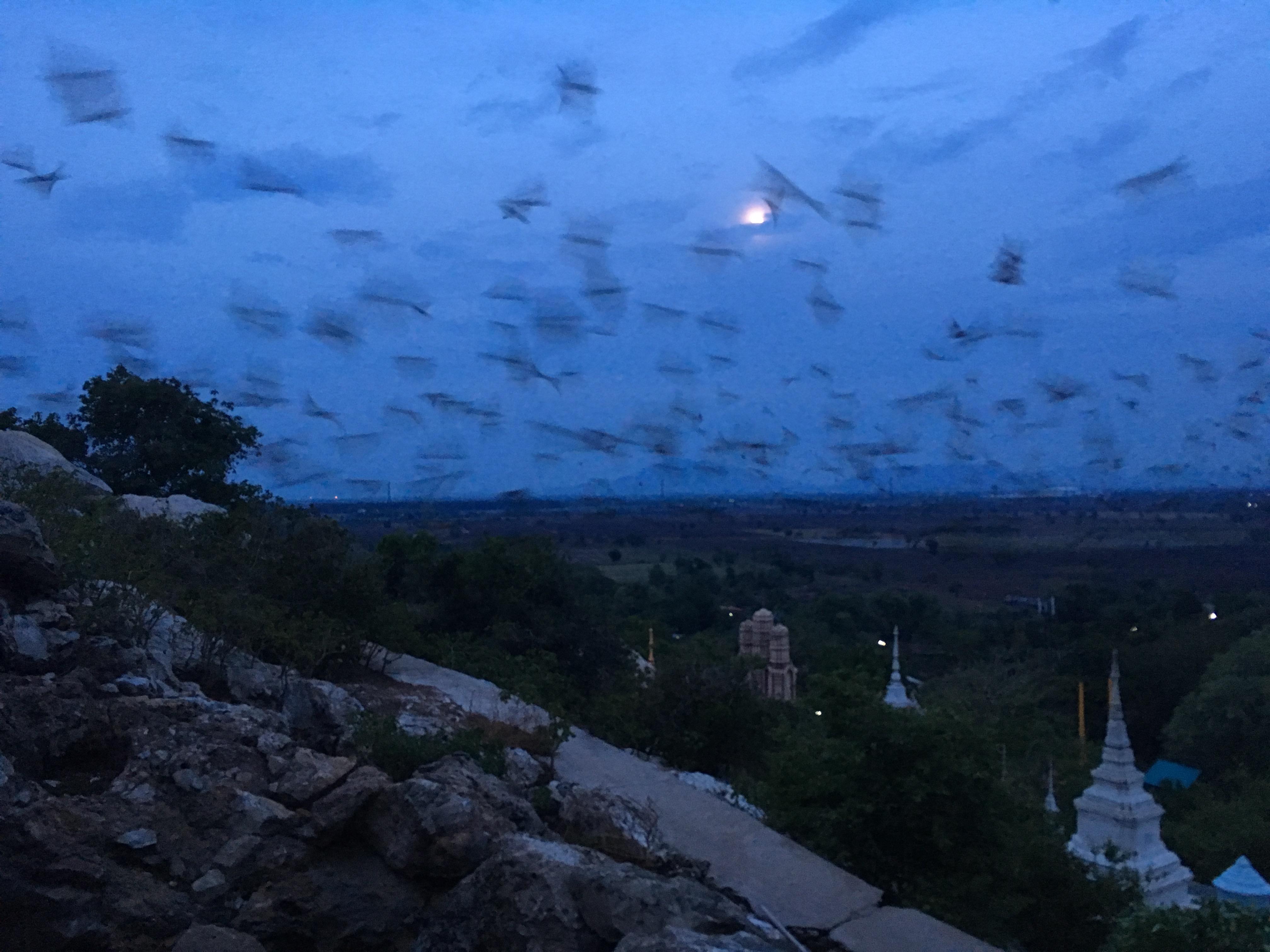 Lopburi Sight Seeing63
